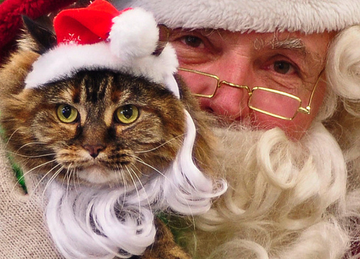 Christmas cat and Santa.