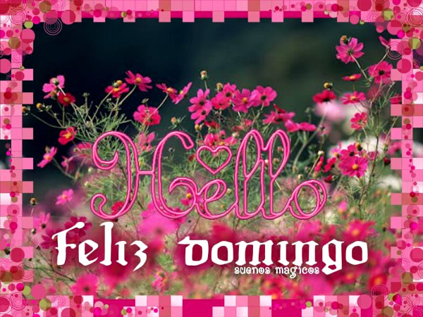 bellas flores Feliz Domingo