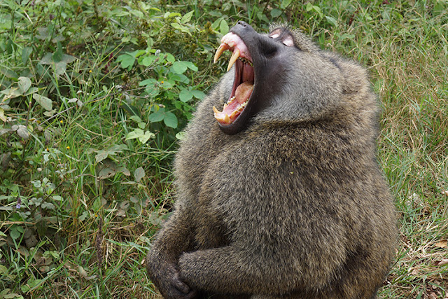 Changes in primate teeth linked to rise of monkeys