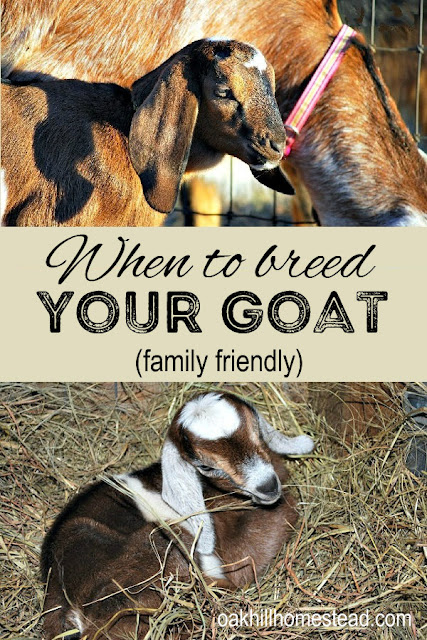 When should you breed your goat? Here are several things to help you decide.