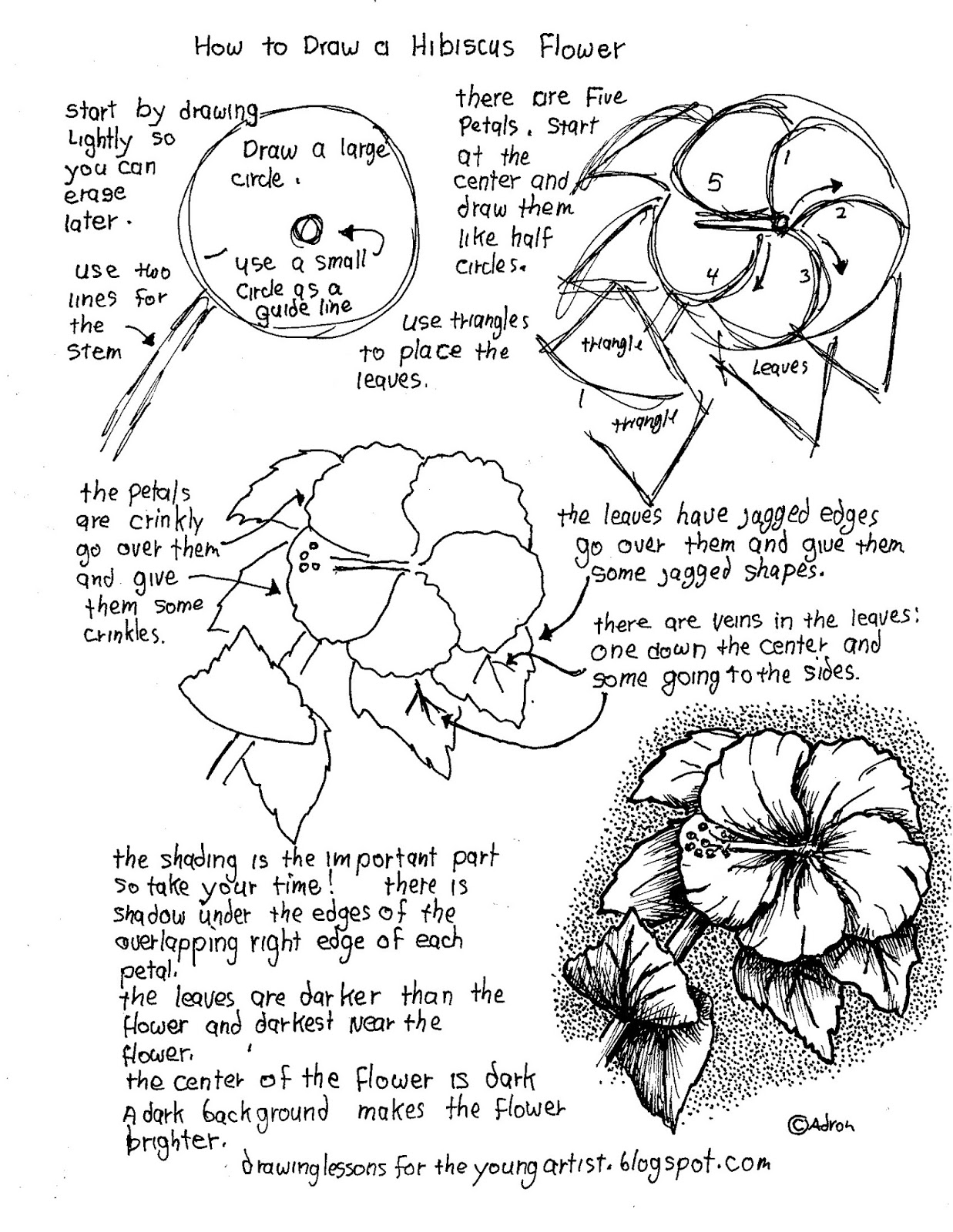 printable how to draw a hibiscus flower worksheet