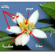 الزهرة ومكوناتها