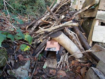 Hedgehog House Recycled Green Fingered Blog