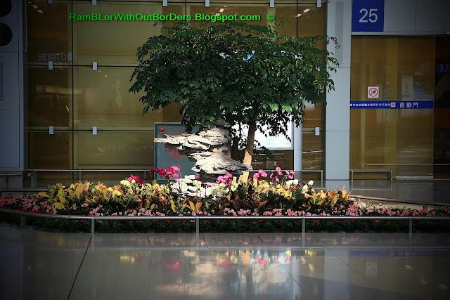 shrub, Penzai, bonzai, T2, HKIA, Hong Kong