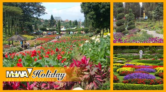 Taman Bunga Cihideung Bandung - Agrowisata Budidaya Tanaman Hias