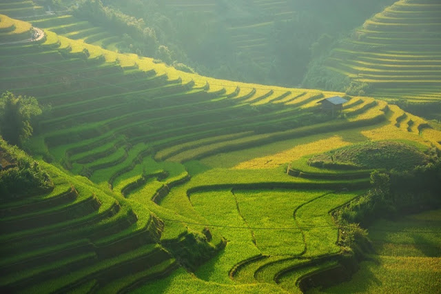 Stunning fields in Northern Vietnam 1
