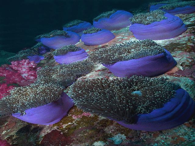 Resultado de imagem para imagens lindas do fundo do mar
