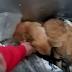 Incident scandalos la un adăpost de animale din Moinești! Angajații au băgat un câine viu într-o ladă frigorifică (VIDEO)