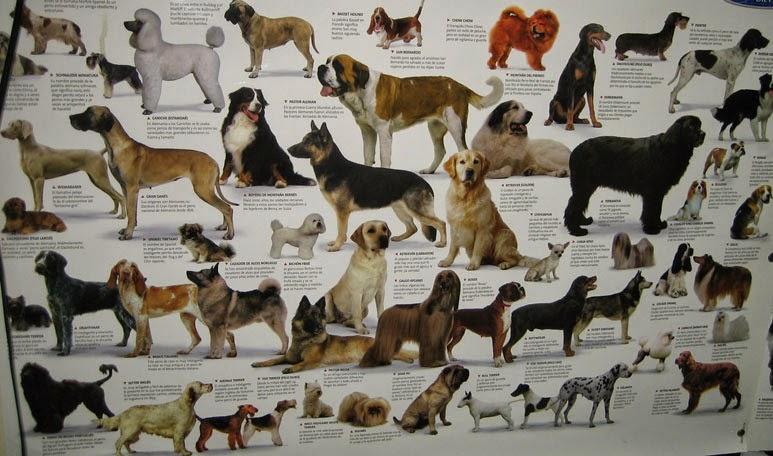 Mundo Rott Cuantas Razas De Perro Hay