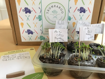 Trunkaroo activity box growing seeds