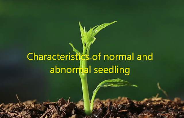 Characteristics of normal and abnormal seedlings