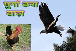 Murga Bana Baaz Motivational Story In Hindi. मुर्गा बना बाज