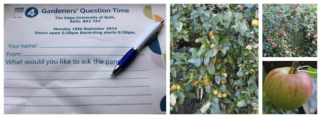 GQT question paper and apple trees
