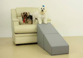 fotos de cãozinhos