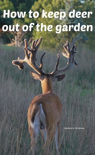 Deer in garden.