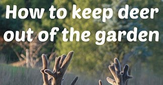 How to keep deer out of your garden 14 different ways