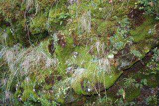 ruta-fauna-senet-cascada-salto
