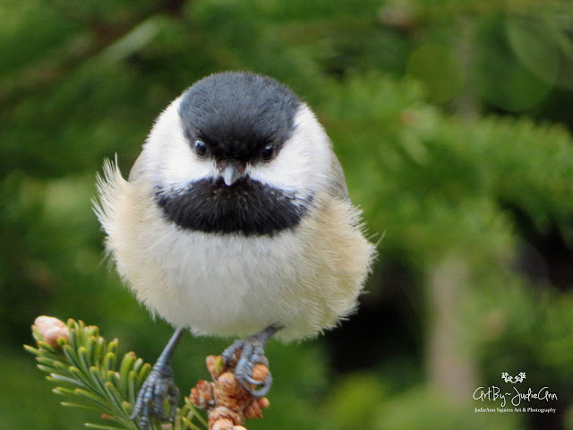 Adorable Bird