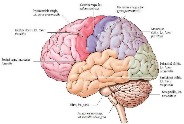 Cara & Upaya Meningkatkan Kecerdasan Otak Anak Usia Dini Secara Alami