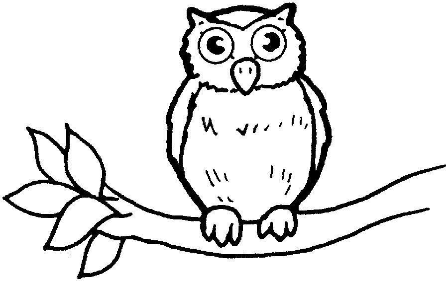 wild animal owl bird coloring books to print. Black Bedroom Furniture Sets. Home Design Ideas