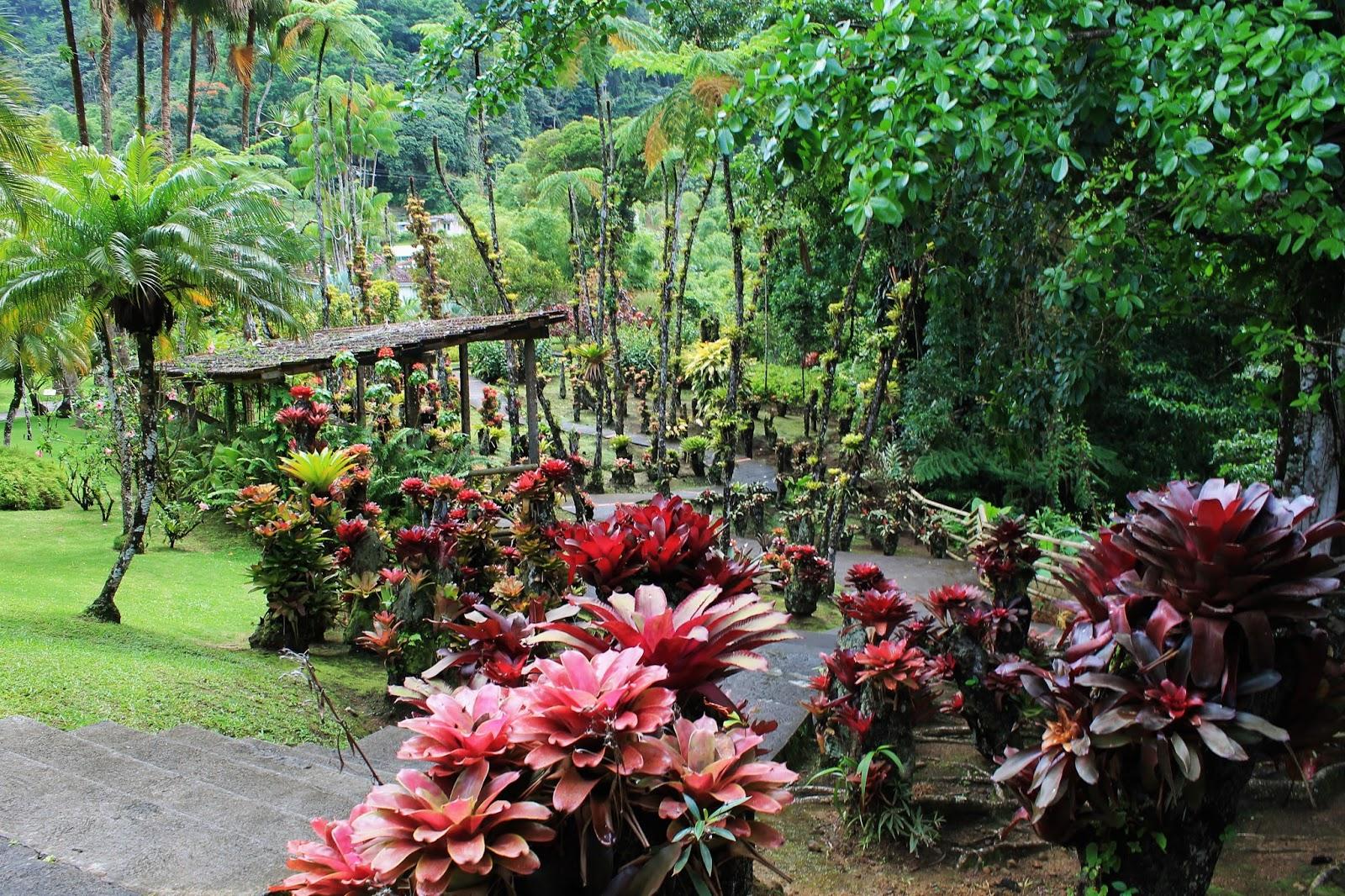 jardin de balata martinique arbre ananas