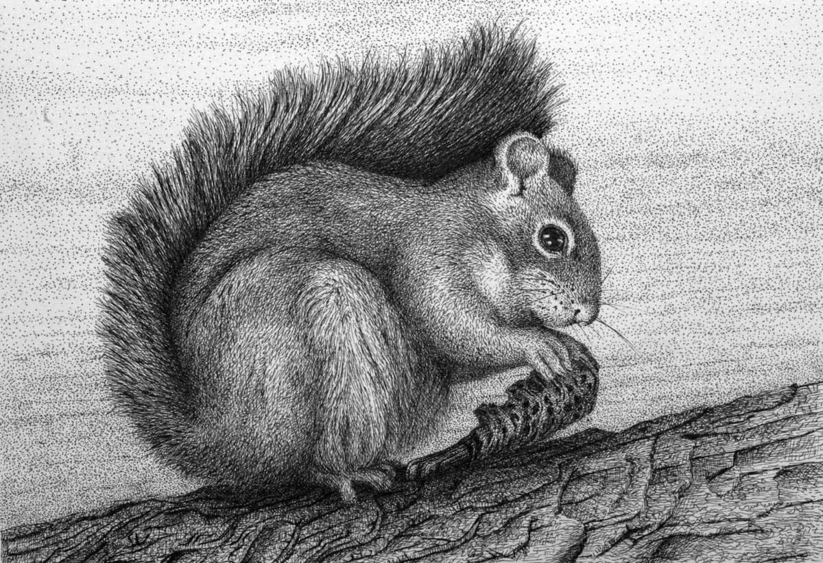 05-Squirrel-Rens-Ink-Animal-Wildlife-Pen-and-Ink-Stippling-Drawings