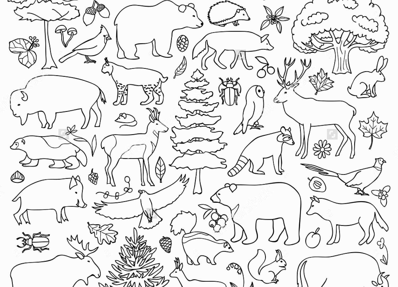 картинки домашних животных раскраска на одном листе нити