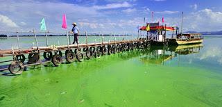 Fósforo que contamina el agua