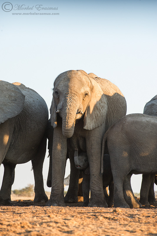 An Elephantine Moment