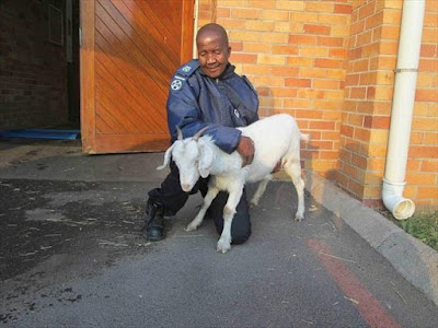 Man-From-South-Africa-Was-Found-Guilt-Of-Sleeping-With-Goat