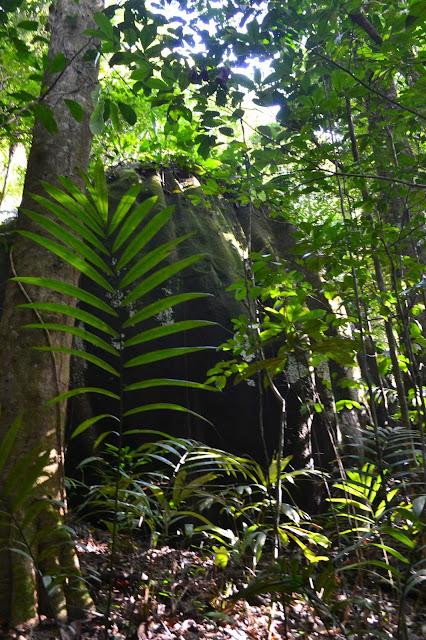 Guyane, savane roche Virginie, régina