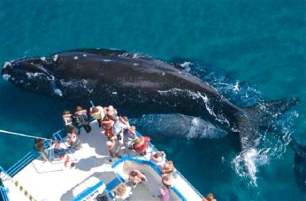 Peninsula Valdes en Argentina y ballena austral
