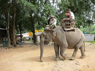 Tourist Elephant - Land of Love