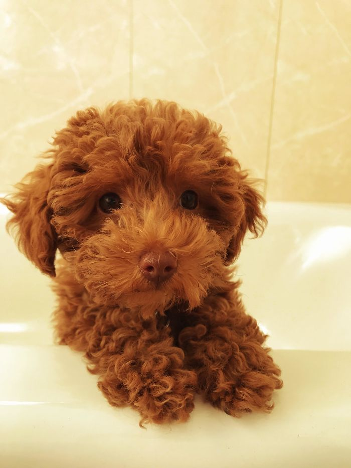 20 Adorable Puppies That Melted Our Hearts