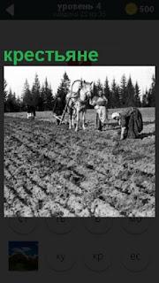 В поле крестьяне с помощью лошади делают борозду и сажают картошку