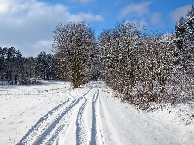 zimowy krajobrazy, zima, drzewa, przyroda