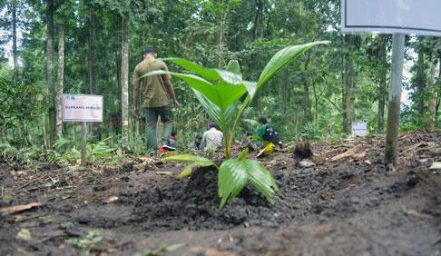 Konservasi Pinang Jawa di Kawasan TNBTS
