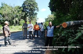 Rupinus Tegaskan Jangan Coba-Coba Tebang Pohon Secara Ilegal