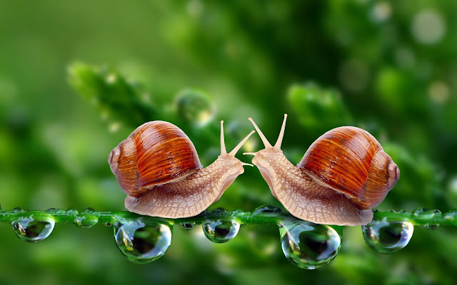 Snail for Beauty and Health