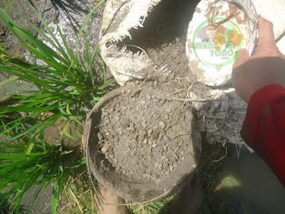 Pupuk kandang untuk tanaman padi admin.