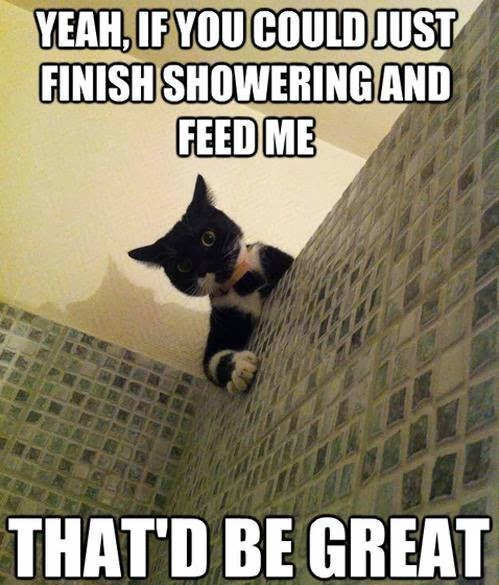 Earth~2~SD: Crazy Funny Cat Pictures with Captions