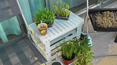 balkónová záhrada, úroda zeleniny na balkóne