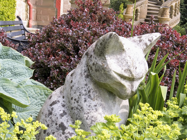 Why visit Belfast from Dublin: The cats in Belfast Castle Garden