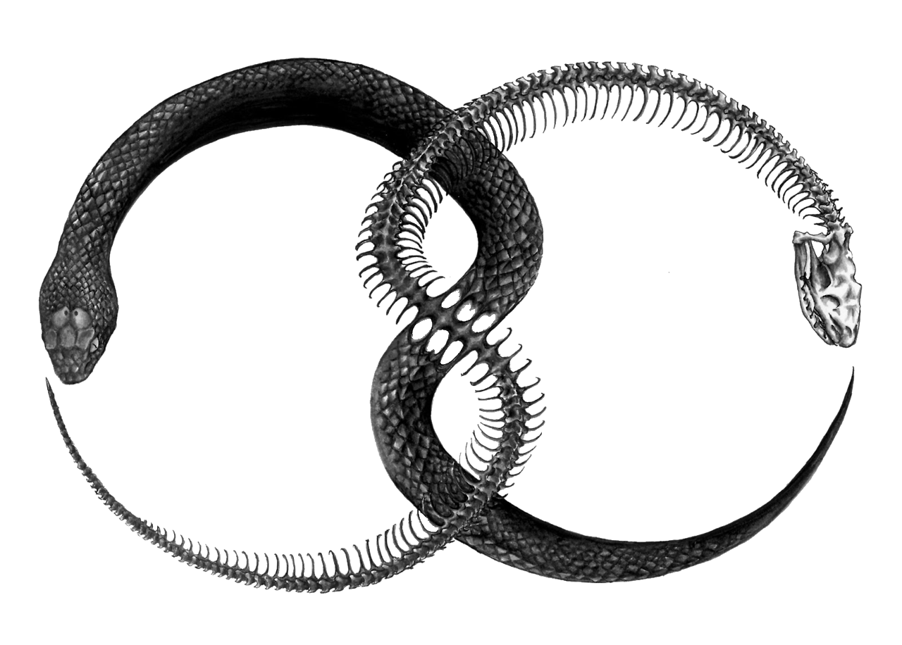 The occult background of chemistry the ouroboros symbol the in alchemy it represents the spirit of mercury the substance that permeates all matter and symbolizes continuous renewal a snake is often a symbol of biocorpaavc Gallery