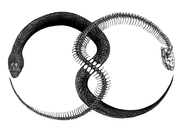 The Occult Background of Chemistry: The Ouroboros Symbol