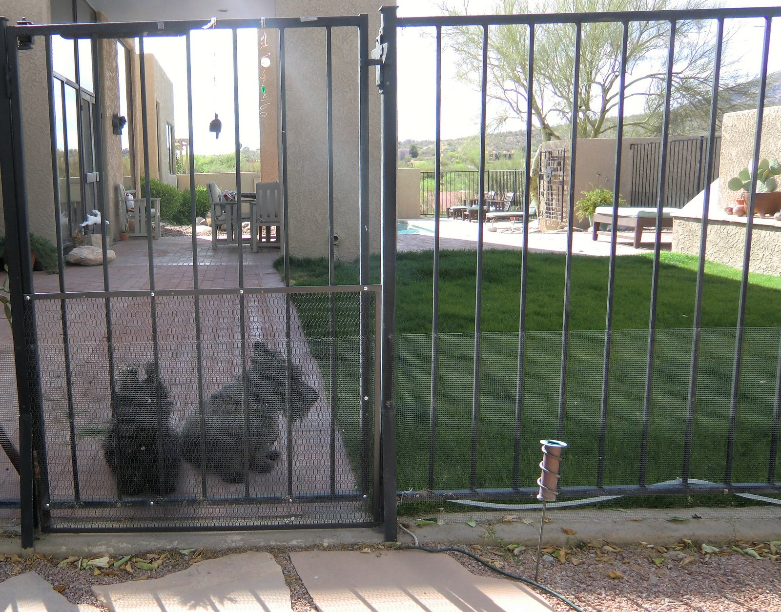 How To Keep Dog From Jumping Fence Two Little Square Black Dogs Square Dog Friday