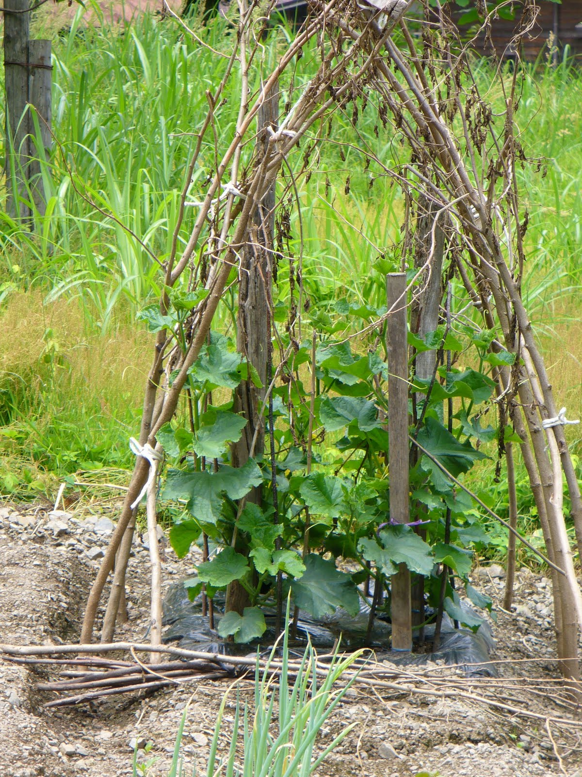 Bellingen Seed Savers: Growing Vegetables and using Bamboo ...