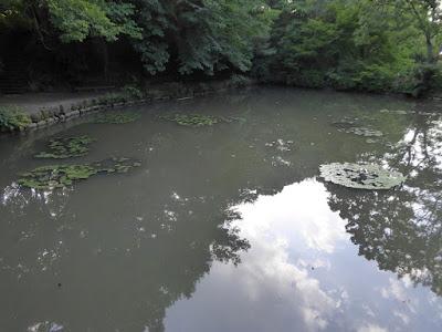 山田池公園のスイレン池