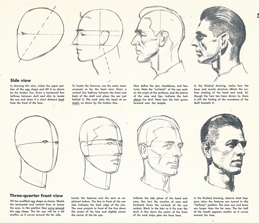 artistic anatomy drawing the head