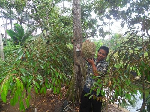 Durian Bawor, Inilah Montongnya Banyumas